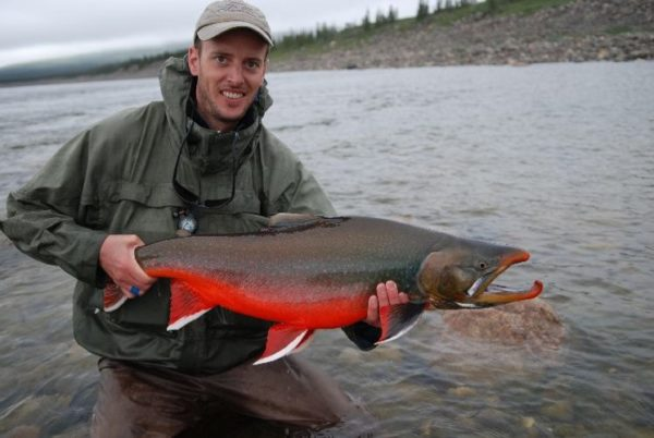 Arctic char in spawning colors