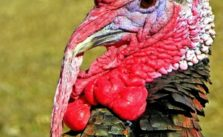 Tips for spring turkey hunting